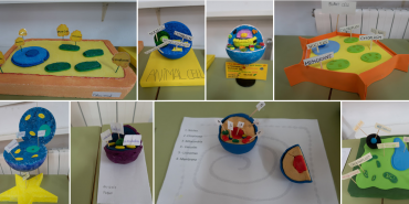 Proyectos de Science en 5º