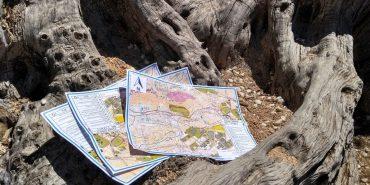 Jornada de orientación con 4º en la Sierra San Miguel